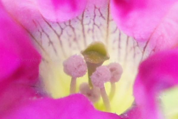 100% Crop - Purple Flower - Nex-C3, 18-55mm lens @ 55mm, f/7.1, 1/60sec, ISO 1600