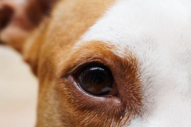 Sadie Close-Up - Sony Nex-5n w/ 18-55mm lens @ f/5.6, 1/125sec, 55mm, ISO 800