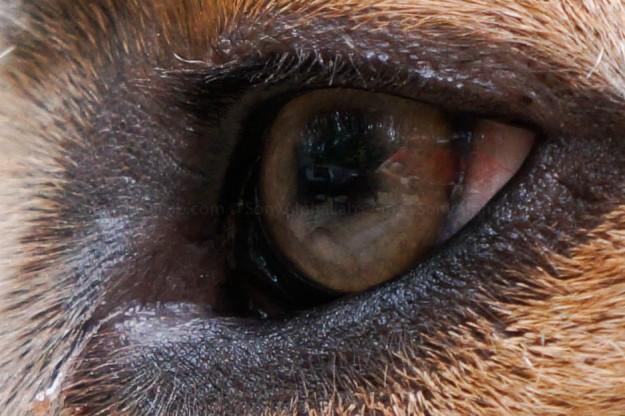 100% Crop - Chubs - Sony Nex-5n w/ 18-55mm lens @ f/5.6, 1/160sec, 55mm, ISO 800