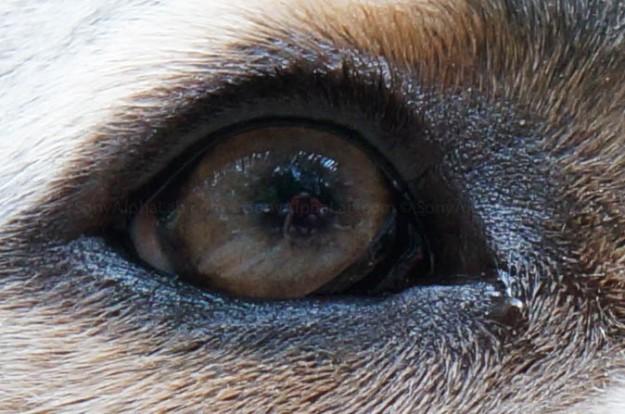 100% Crop - Chubs - Sony Nex-5n w/ 18-55mm lens @ f/7.1, 1/80sec, 55mm, ISO 800