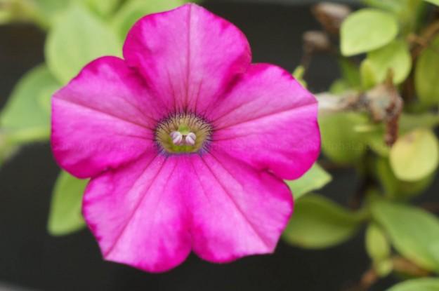 Flower - Sony Nex-5n w/ 18-55mm lens @ f/7.1, 1/320sec, 55mm, ISO 800