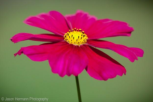 Contrast - Flower