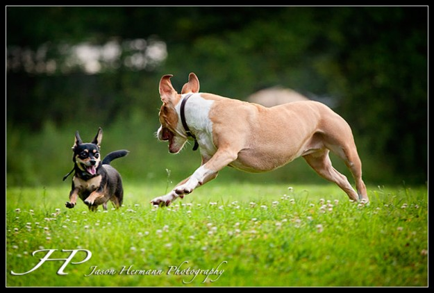 Action - Sadie and Brody