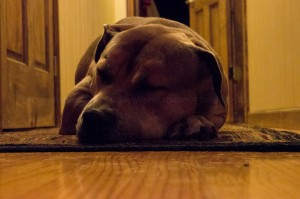 Sony A580 - ISO 12800 - Lazy Dog Still There!!