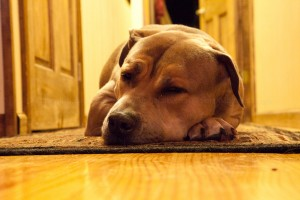 Canon 5D Mark II - ISO 12800 - Lazy Dog