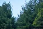 Sony A57 w/ Sony 24-70mm f/2.8 Carl Zeiss Lens @ f/8, 1/60sec, I