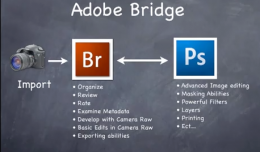 Adobe Bridge - All you need to know