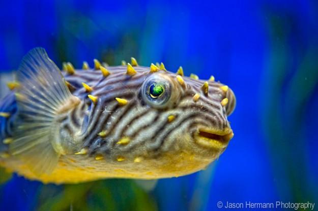 Smiling Fish