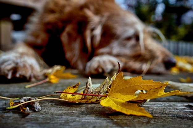 Dog sleeping in autumn