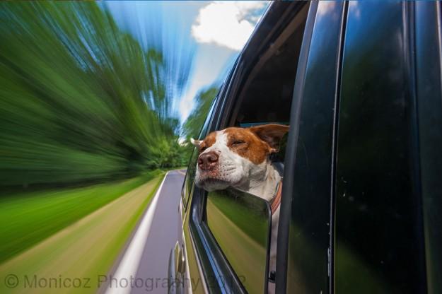 """Car Ride!"""