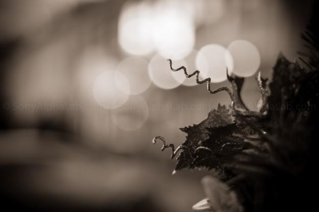 Minolta MD 50mm f/2 Lens @ f/2
