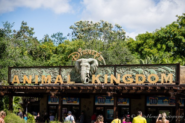 Disney's Animal Kingdom and the Sony Nex-6 @ 55mm, f/4.5, 1/800sec, ISO 100