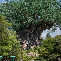 Disney's Animal Kingdom and the Sony Nex-6