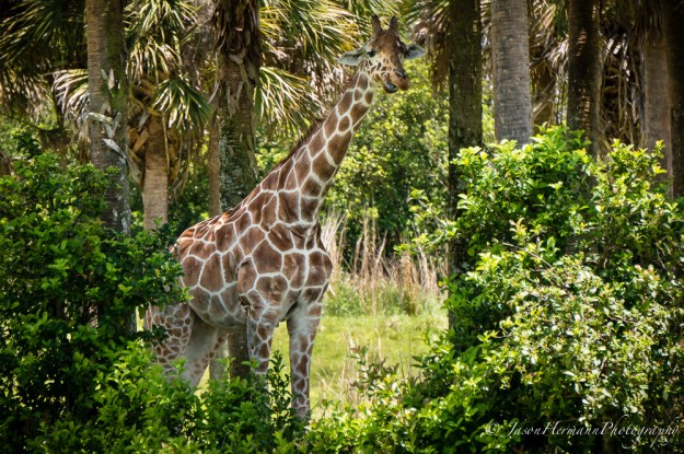 Disney's Animal Kingdom and the Sony Nex-6 @ 210mm, f/6.3, 1/800sec, ISO 640