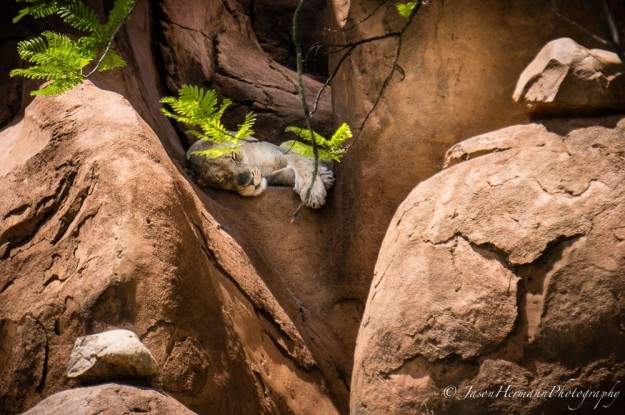 Disney's Animal Kingdom and the Sony Nex-6 @ 210mm, f/6.3, 1/800sec, ISO 320