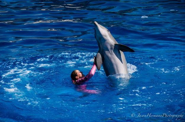 Seaworld - Sony Nex-6 w/ sel55210 lens @150mm, f/5.6, 1/640sec, ISO 100