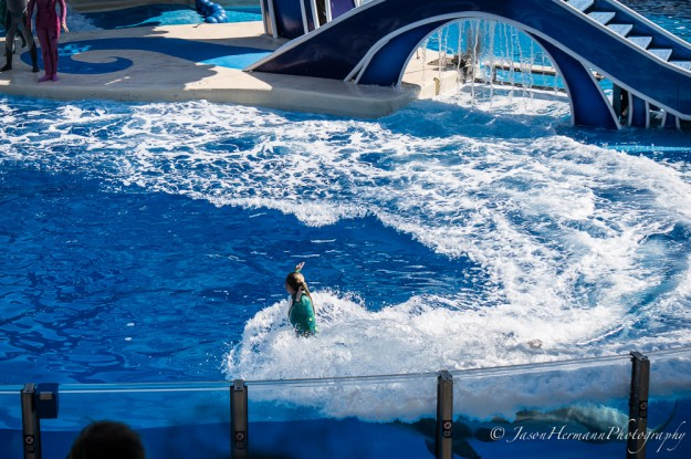 Seaworld - Sony Nex-6 w/ sel55210 lens @55mm, f/4.5, 1/1000sec, ISO 100