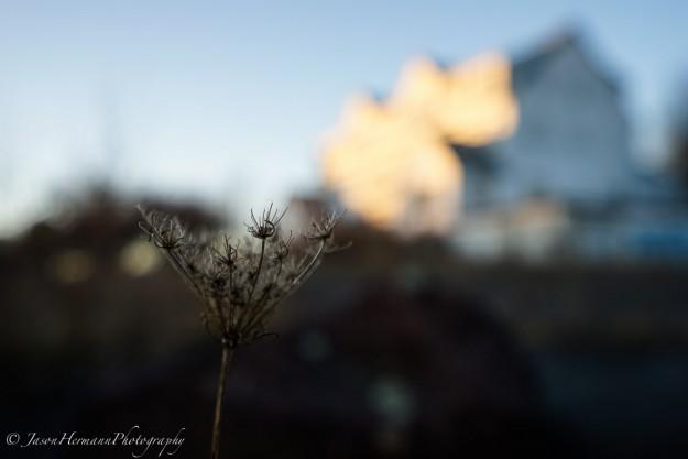 Sony A7r, FE 16-35mm f/4 OSS ZA Lens @ 35mm, f/4